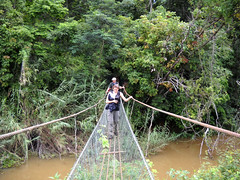 wetland, stream, adventure, rainforest, suspension bridge, walking, water, tree, river, canopy walkway, nature, forest, rope bridge, natural environment, wilderness, jungle, bridge,