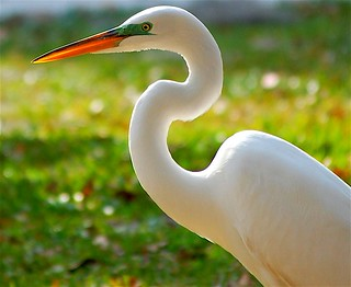 Egret at Day's End