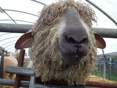 Rare Breeds Petting Farm.