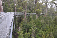 Tahune Forest Air Walk
