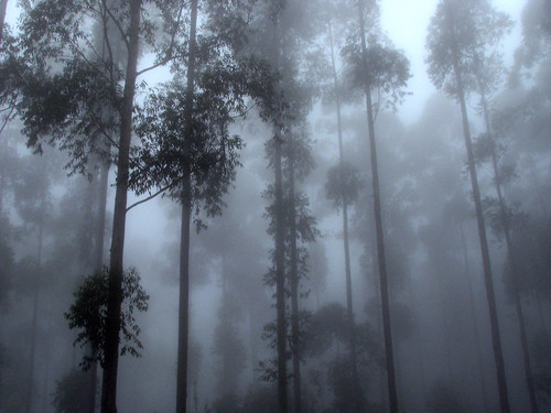 africa trees mist fog forest southafrica mood african foggy silhouettes tranquility atmosphere explore arbres mystical hazy za tranquil südafrika mpumalanga earthday southafrican talltrees sudafrica hazyview explored sandraleidholdt sudafrika suráfrica leidholdt sandyleidholdt