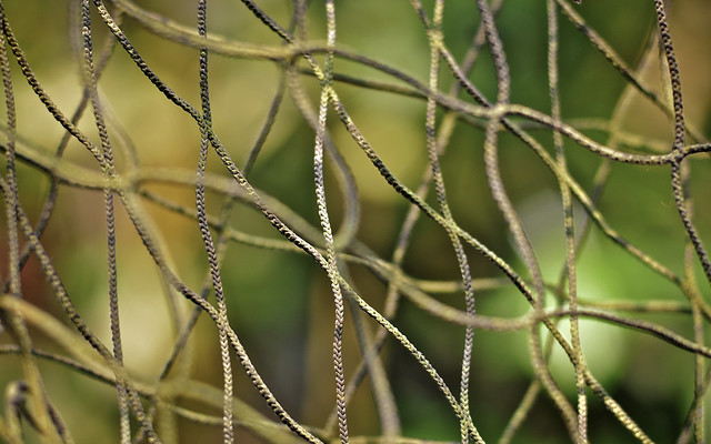 Rope Fence In The Rainforest Biodome