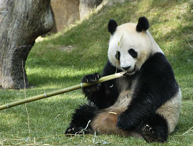 Mei - Panda (2)