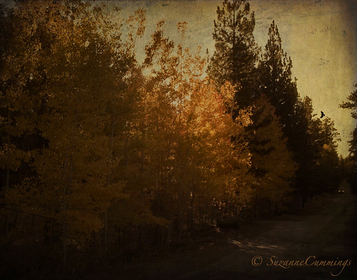 road autumn trees nature landscape action textured softfaded skeletalmesstexture magicunicornverybest