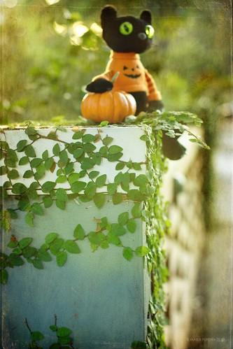 Fence Friday Halloween Spirit Edition (EXPLORED!)