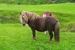 stallion(0.0), herd(0.0), animal(1.0), prairie(1.0), mane(1.0), mare(1.0), grass(1.0), pack animal(1.0), horse(1.0), grazing(1.0), fauna(1.0), mustang horse(1.0), meadow(1.0), pasture(1.0), pony(1.0), grassland(1.0),