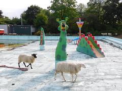 Sheep at the swimming pool #Summervacations #FlickrFriday