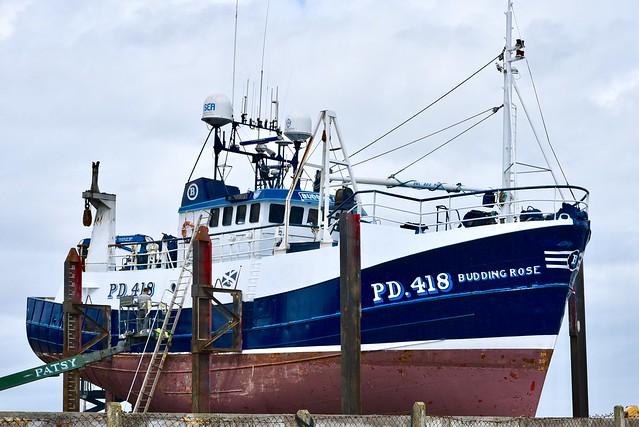 PD418 Budding Rose Fraserburgh Fishing Harbour Scotland 2017