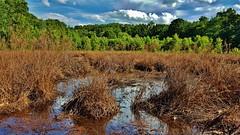 Mabbott Pond