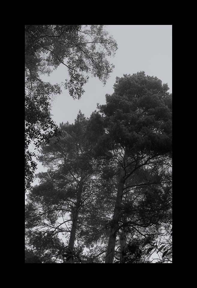 Canopy by Nicholas M Vivian