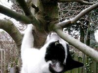 kitten gif