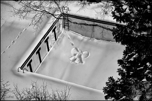 christmas holiday snow angel - saint paul, mn