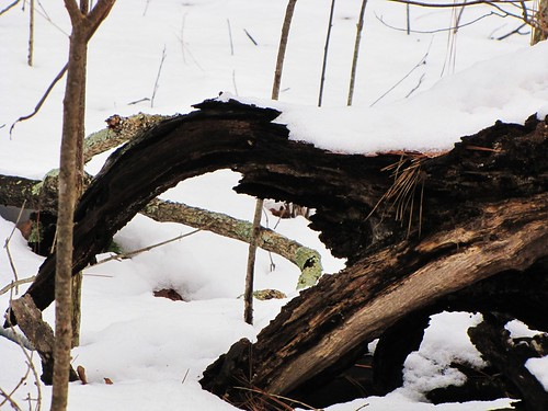 wood trees usa snow nature canon landscapes log view state south country peaceful powershot daytime arkansas tranquil ozark sx10is waltphotos