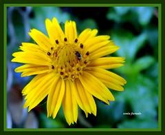 Quinta-flowers