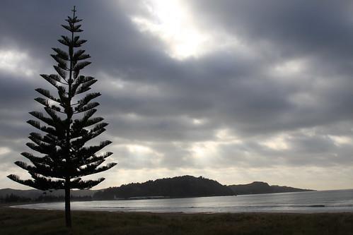 newzealand sun pinetree sunrise gisborne waikanaebeach