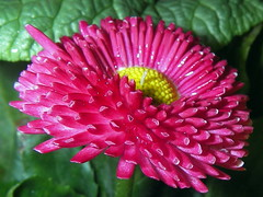 Vårens Blommor