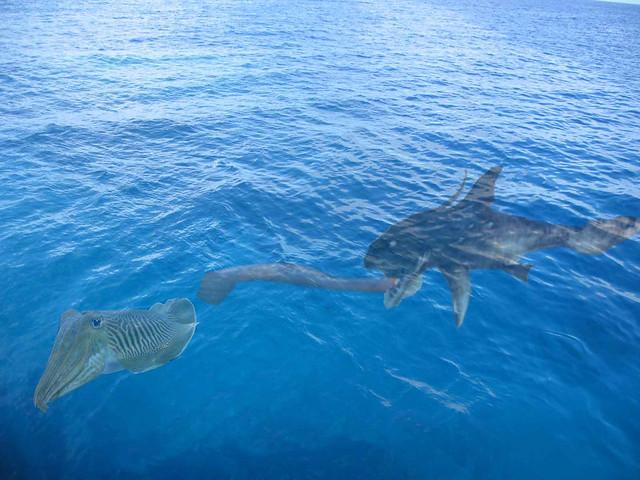 Primeval shark flickr photo sharing