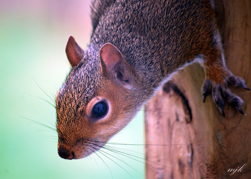 Eye Catching Young Squirrel