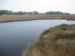 salt marsh in Carrabelle, FL