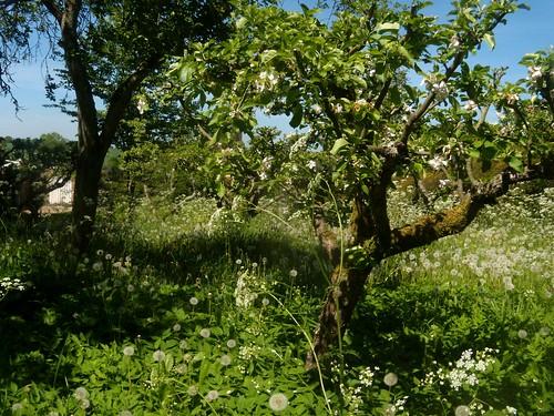 Orchard, Ashe House