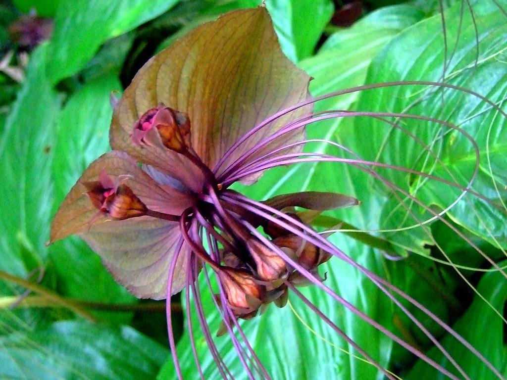 BAT FLOWERS BAT BAT FLOWERS Blog