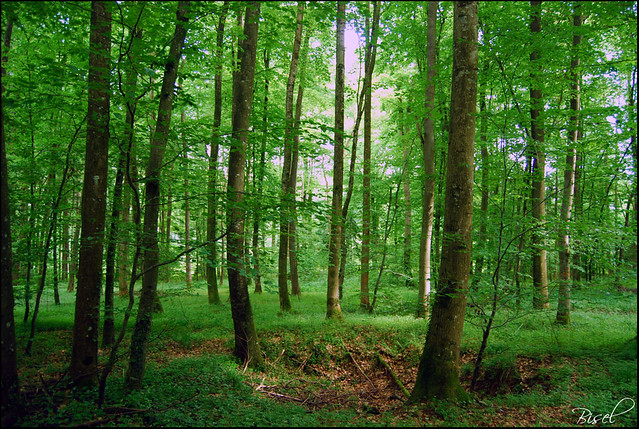 Dans les bois vers bisel flickr photo sharing for Vers dans le bois