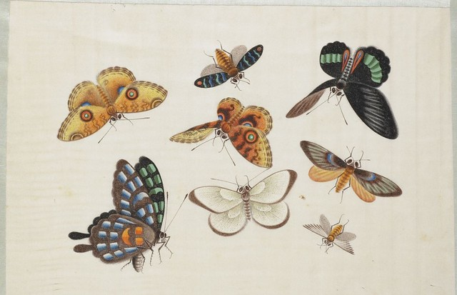 19th century watercolour insect sketch