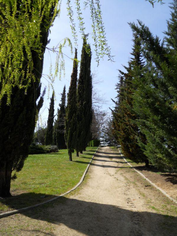 Paseo con árboles