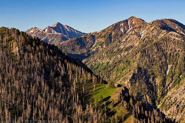 Bald Mountain & Nebo