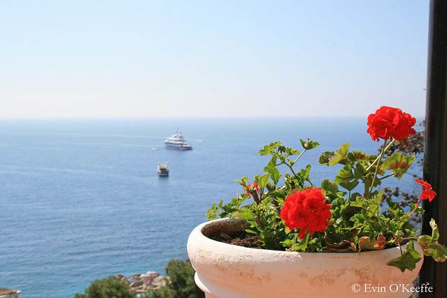 Geraniums with Sea View