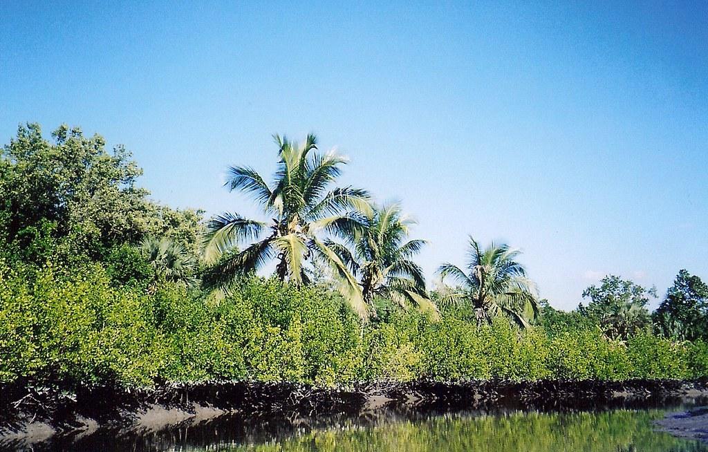 Chokoloskee Island Google Maps