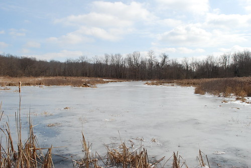 cold ice frozen pond marsh wetland chilo clermontcounty chilolock34park