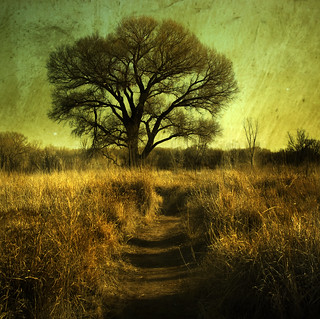 The Way to the Great Tree