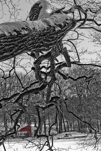 Baum überhängend Colorkey