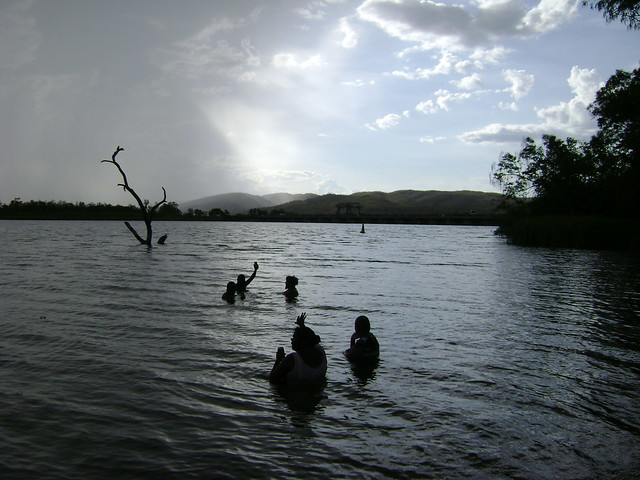 The Swim Beach Tree - Ord River - Río