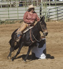 animal sports, rodeo, western riding, mare, stallion, event, equestrian sport, sports, charreada, reining, horse harness, barrel racing,