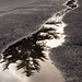 Puddle Reflection 9738