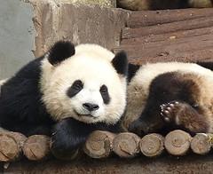 Shanghai Zoo China