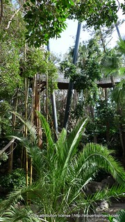 Image of Katandra Treetops. tenerife puertodelacruz islascanarias loroparque