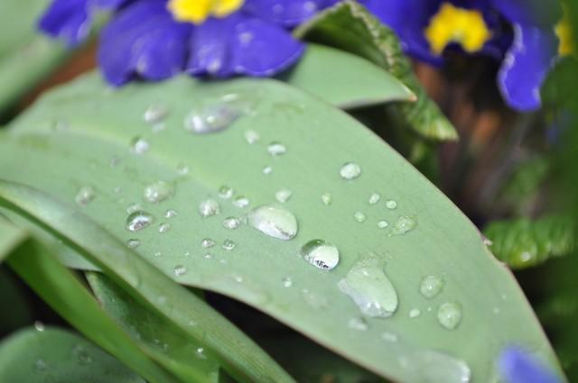 Sunday morning dew