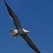 Gomera - Seemoeve by margaretha_hopfner - 840.000+views