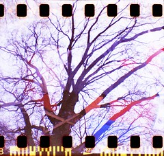 tree1000