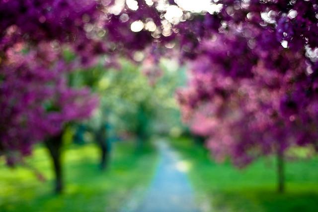 Imaginary - Beautiful Bokeh Photography
