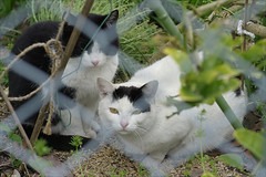 Fenced in Felines Fain to be Free!