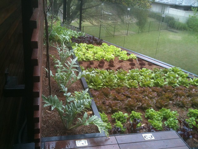 Rooftop Vegetable Gardens : Edible Roof Vegetable Garden  Flickr - Photo Sharing!