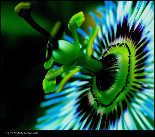 fantasticflower