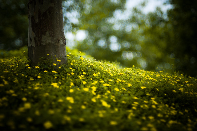 Green Tree - Beautiful Bokeh Photography