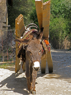 Donkey loaded with wood | by retrotraveller