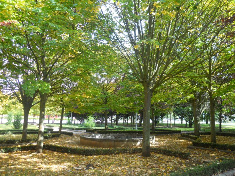 Tilo en otoño 7