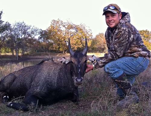 Nilgai Hunting